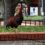 Ybor City's Centennial Park to erect Largest Cock Ever: A SportsChump/Tampa News Force Exclusive